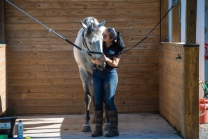 40 Horse Grooming Tips Cowboy magic