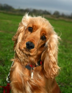 8 Steps to Untangle Matted Dog Hair