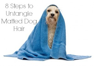 Untangle Matted Dog Hair