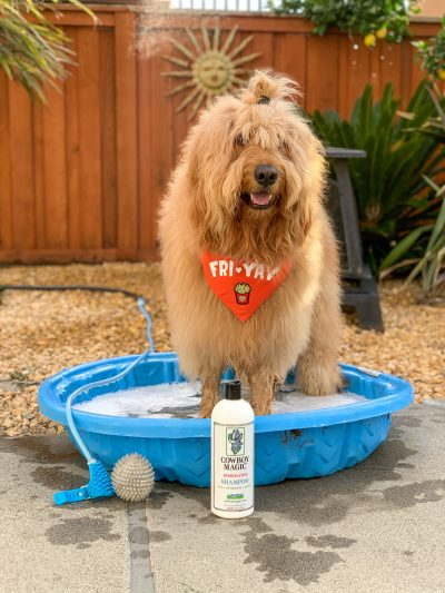 dog in kiddie pool with Cowboy Magic product for grooming