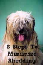 8 Steps to Minimize Shedding - Dogs