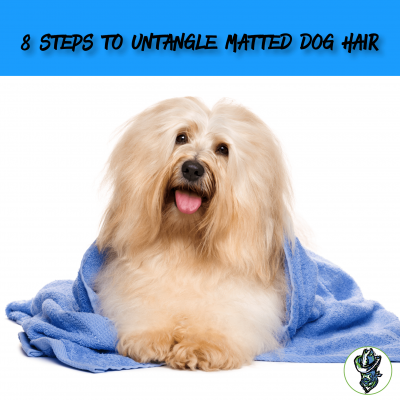8 Steps To Untangle Matted Dog Hair Cowboy Magic