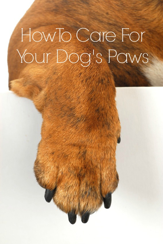 Dog Hair Between Paws