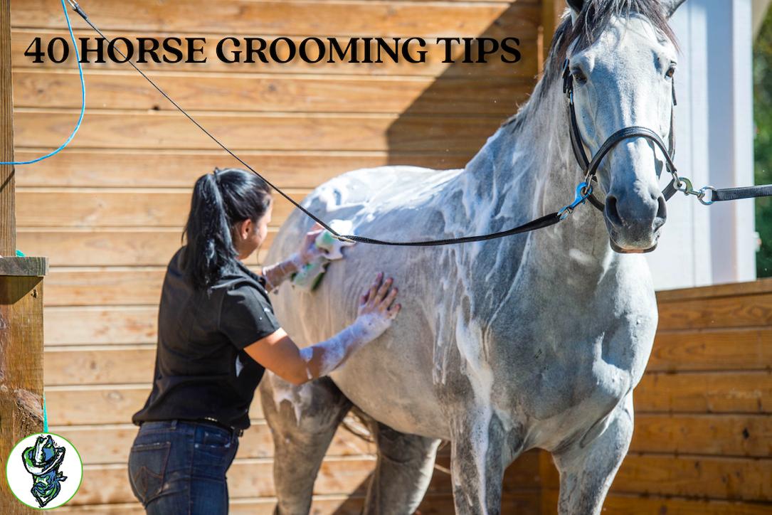 40 Horse Grooming Tips Cowboy Magic