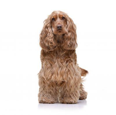 Untangled dog hair