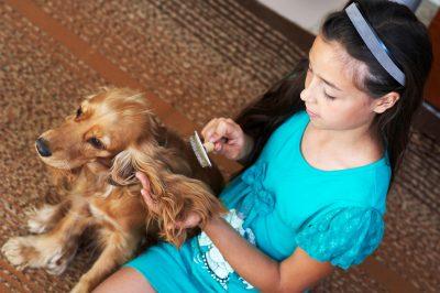 Girl brushing dogs hair