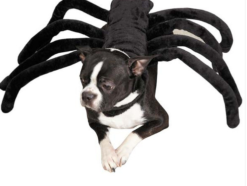 Dog Spider Costume  sc 1 st  Cowboy Magic & 10 Halloween Costumes for Dogs - Cowboy Magic
