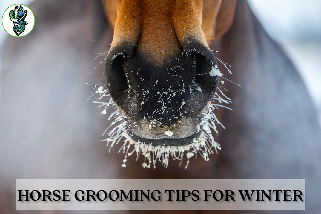 Horse Grooming Tips For Winter Cowboy Magic