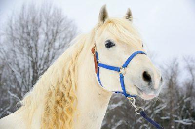 horse curls