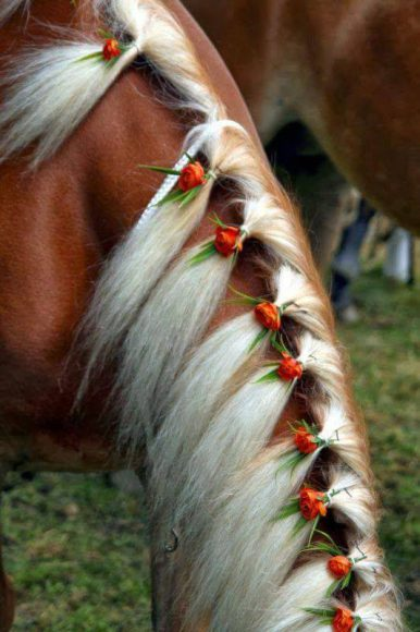 horse tail hair style beautiful hairstyles cowboy magic cowboy magic 5028 | 372714xcitefun horses hairstyle 5 386x580