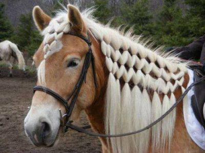 horse macrame