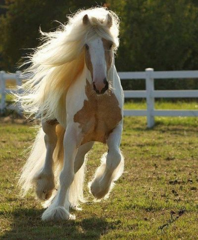 horse mane gold
