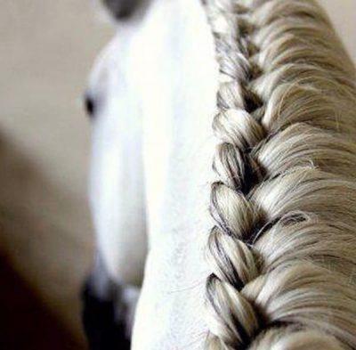 horse french braid