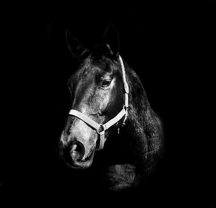 black a horse has - photo #41