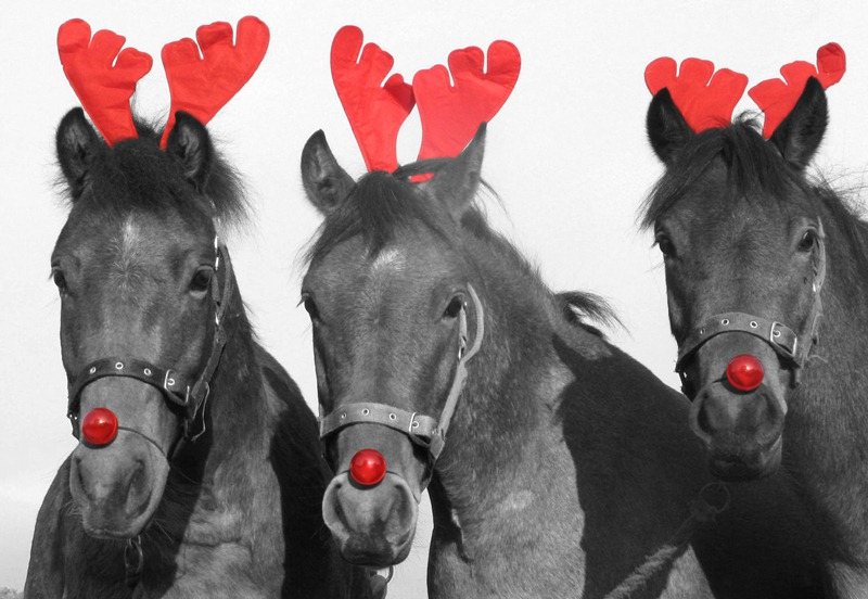 feature image source - Christmas Horses