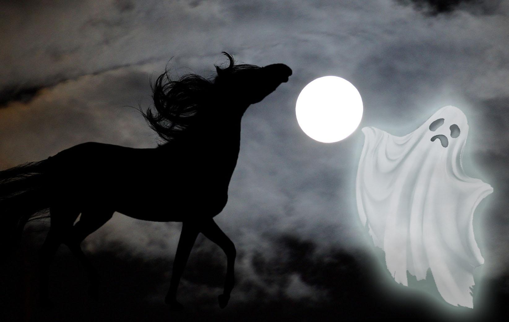 Horses That Saw A Spooky Ghost Cowboy Magic Cowboy Magic