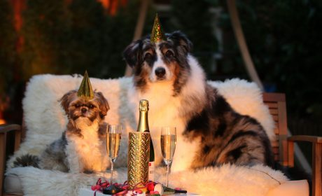 pets new years resolutions