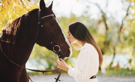 horse valentine's day