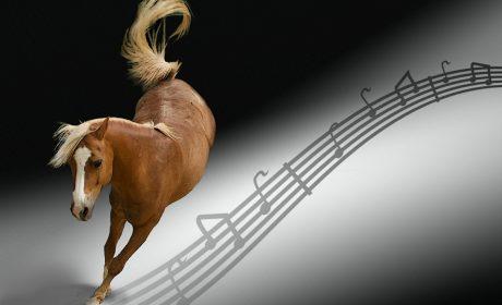 Horses Dancing