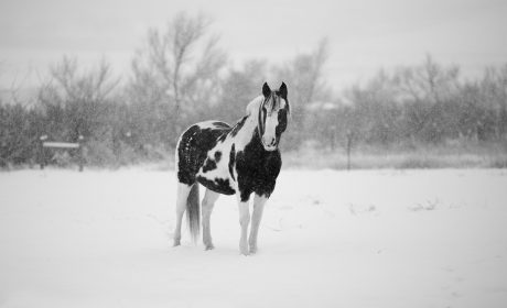 horses and ice